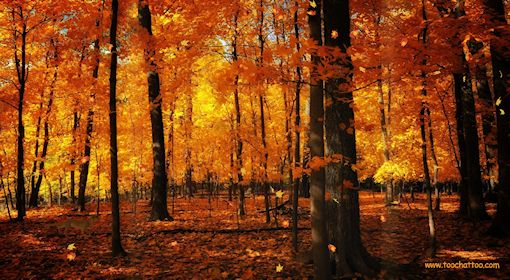 Ecran de veille paysages d 39 automne for Photo ecran veille gratuit
