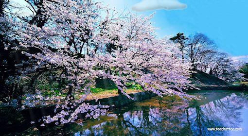 Ecran de veille paysages de printemps for Fond ecran anime gratuit