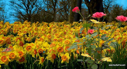 Ecran de veille gratuit des fleurs en screensaver for Photo ecran veille gratuit