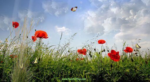 Ecran de veille paysages de printemps for Photo ecran veille gratuit