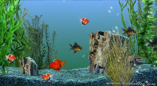 Fond d cran aquarium anime gratuit for Fond aquarium